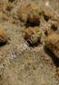 50687_SanglPro_Rexi Terrascaping Desert Stern_72dpi