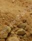 50694_SanglPro_Rexi Terrascaping Desert Dunkelgelb_72dpi