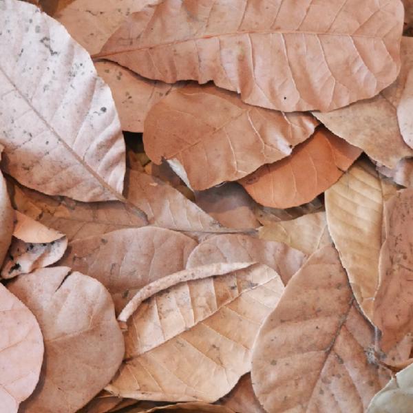 Dekoration Blätter